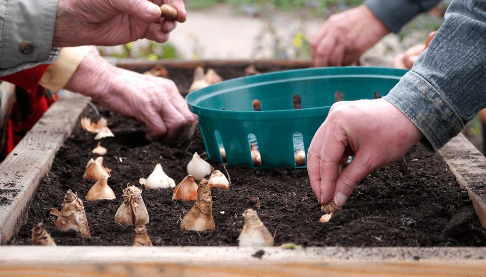 Bepflanzung eines Tischbeetes