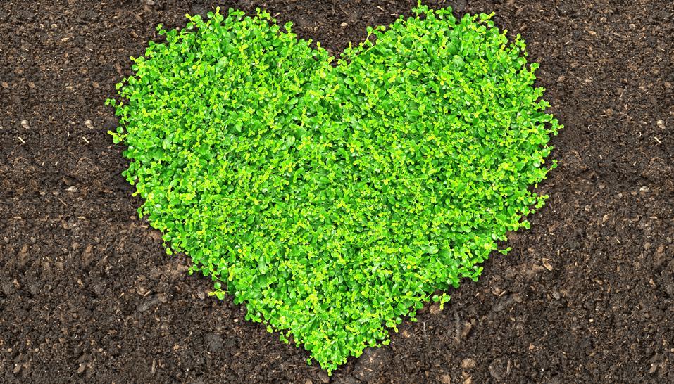 Nährstoffreicher Kompost